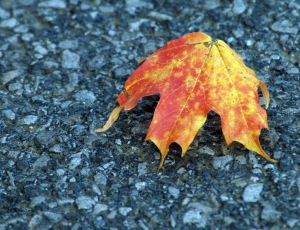 One solitary leaf