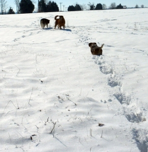 dog outing in snow